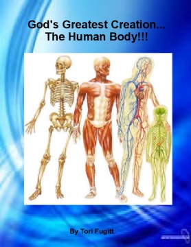 The Human Body!
