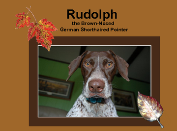 Rudolph the Brown-Nosed German Shorthaired Pointer