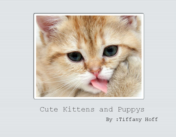 Cute Kittens and Dogs
