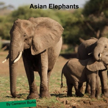 Asain Elephants