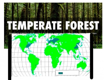 Biomes temperate forest