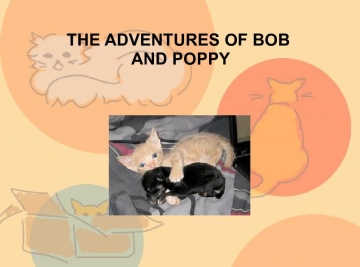 The Adventures of Bob the Monkey