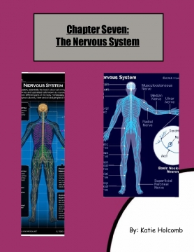 All About The Nervous System