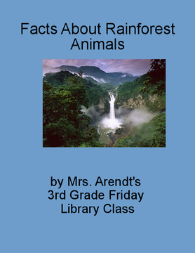 Facts About Rainforest Animals
