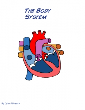 The Body System