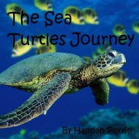 The Sea Turtle's Journey