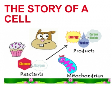 THE STORY OF A CELL