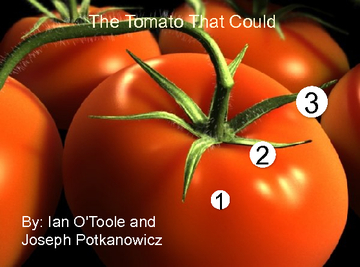 The Tomato That Could
