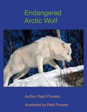 Endangered Arctic Wolf