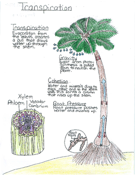 Mrs. Perry's 5th Grade Science