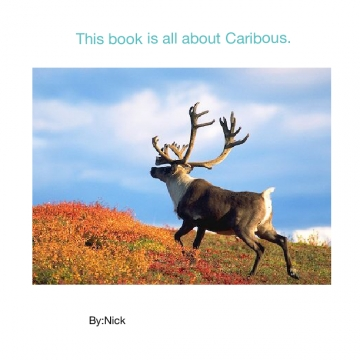 All about Arctic Caribou