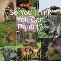 So You Think You Can Parent