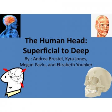 The Human Head: Superficial to Deep