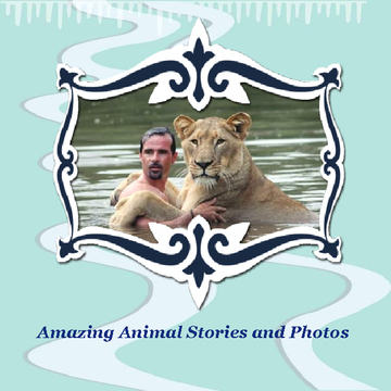 Amazing Animal Stories and Photos
