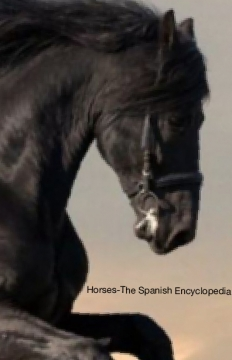 Horses-The Spanish Encyclopedia