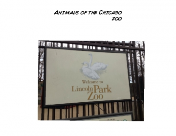Animals at the Chicago zoo