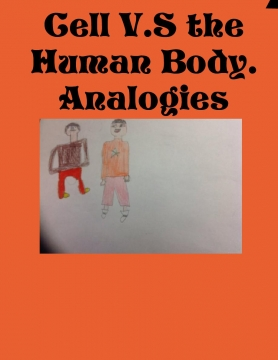 Cell VS Human Body Analogies