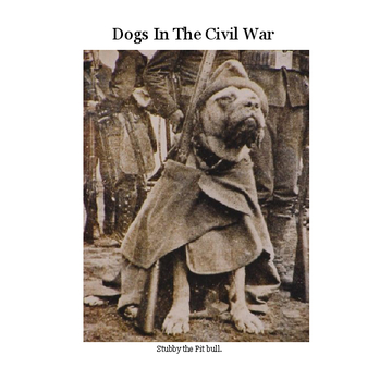 Dogs in the Civil War
