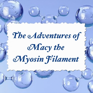 The Adventures of Macy the Myosin Filament