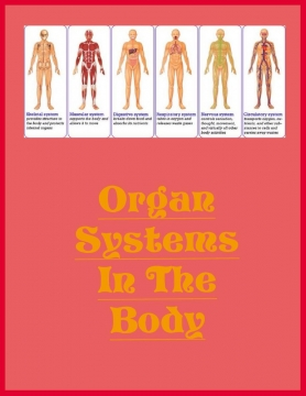 Organ Systems In The Body