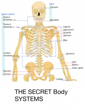 The secret body systems