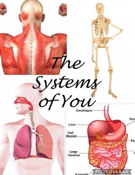 The Systems of You