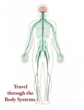 Travel through the Body Systems