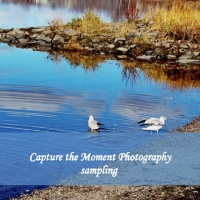 Capture the Moment Photography sampling