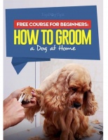 How To Groom (Dogs)