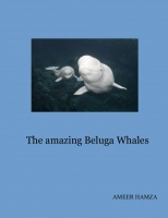 The amazing Beluga Whales
