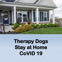 Therapy Dogs Stay at Home CoVID 19