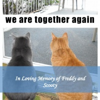 In Loving Memory of Freddy and Scooty