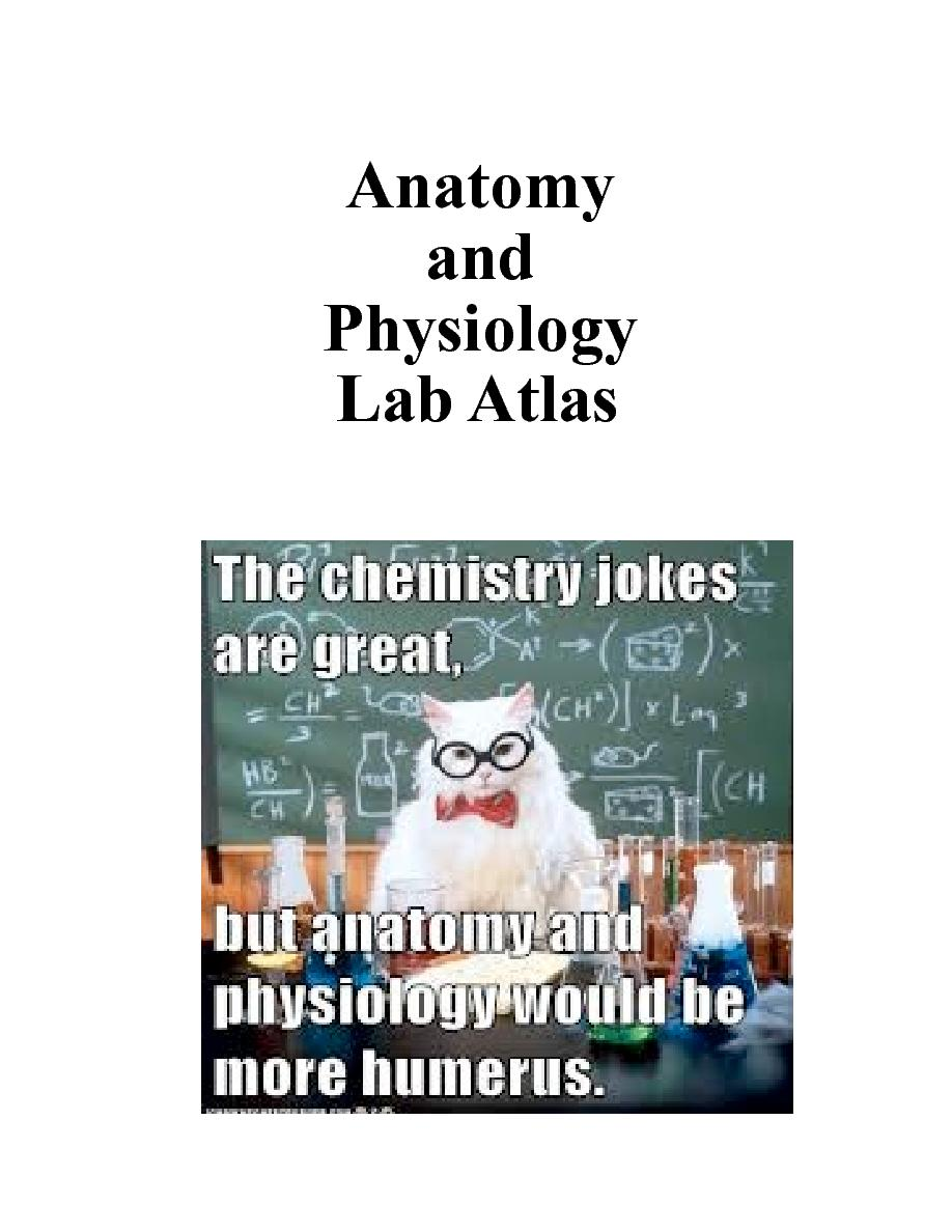 Anatomy Lab Atlas Project | Cover Page | Book 276559 - Bookemon